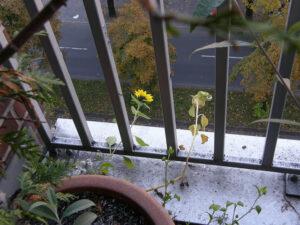 Balkonkübel