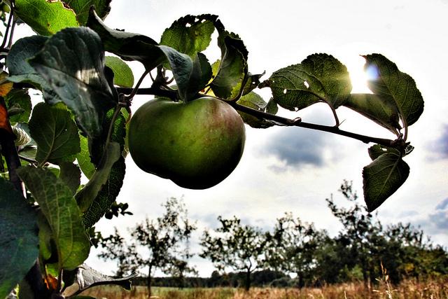 Lieblings Sommerschnitt an Obstgehölzen – Vorteile und Besonderheiten &UH_27
