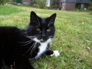 Was hilft gegen Katzen im Garten / Beet - 5 Tipps